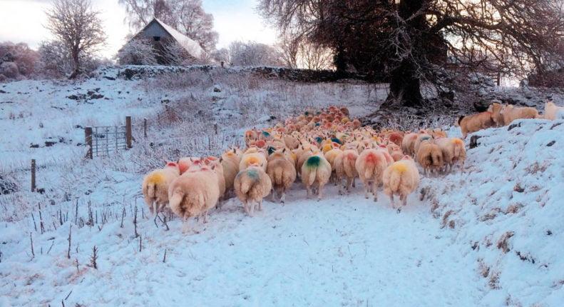 Древнее европейское овцеводство