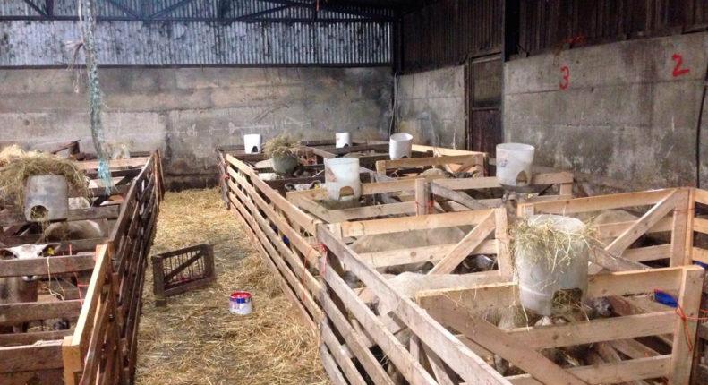 Содержание овец в зимнее время