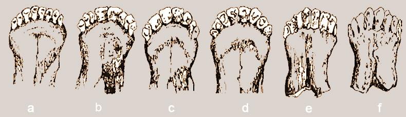 Зубы овцы в зависимости от возраста