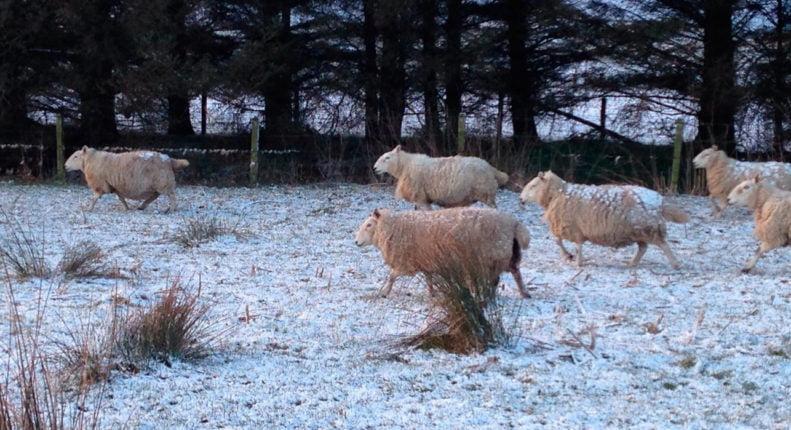 Корма для овец зимой