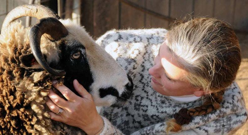 Рацион кормления овец